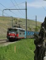 BB 25500/69169/die-sncf-bb-25546-trifft-mit Die SNCF BB 25546 trifft mit ihrem Regionalzug in Russin ein.  1. Mai 2009